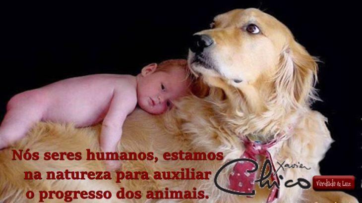 Nós seres humanos estamos na natureza para auxiliar os animais