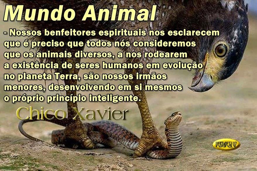 mundo animal chico xavier