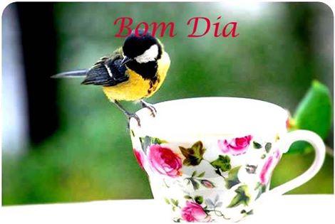 bom dia pássaro amarelo