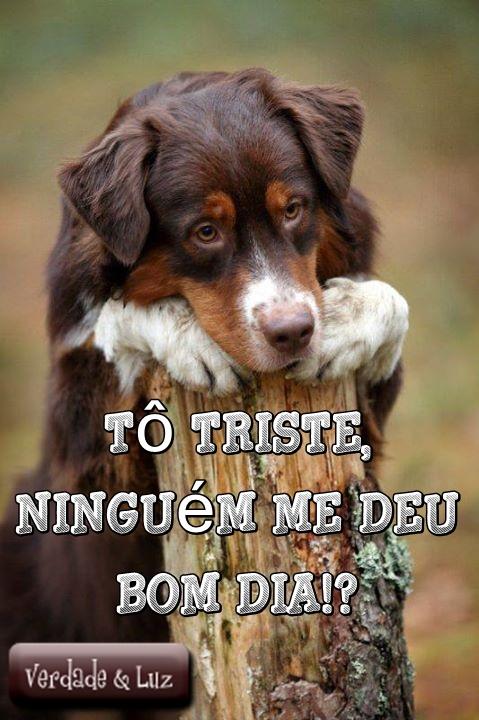 Favoritos cachorro bom dia - Verdade Luz NQ35