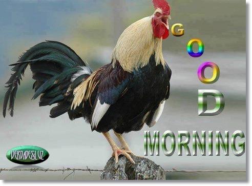 BOM DIA GOOD MORNING