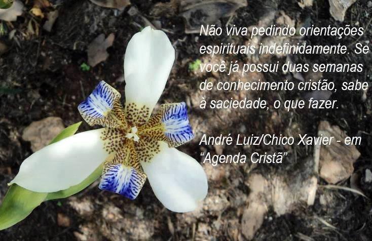 CONHECIMENTO CRISTÃO ANDRÉ LUIZ