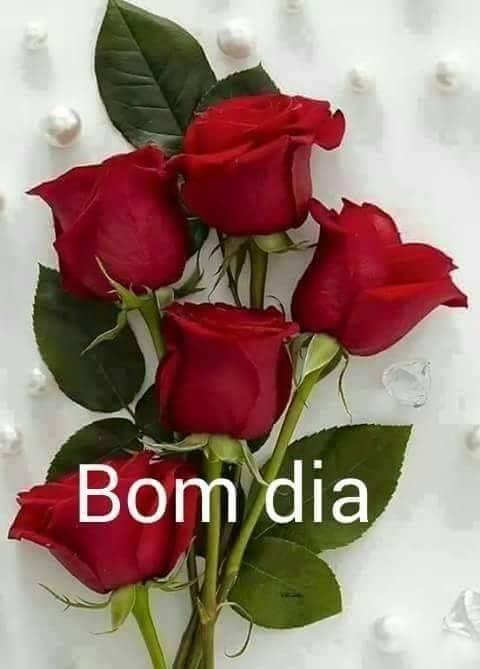 bom dia rosas vermelhas