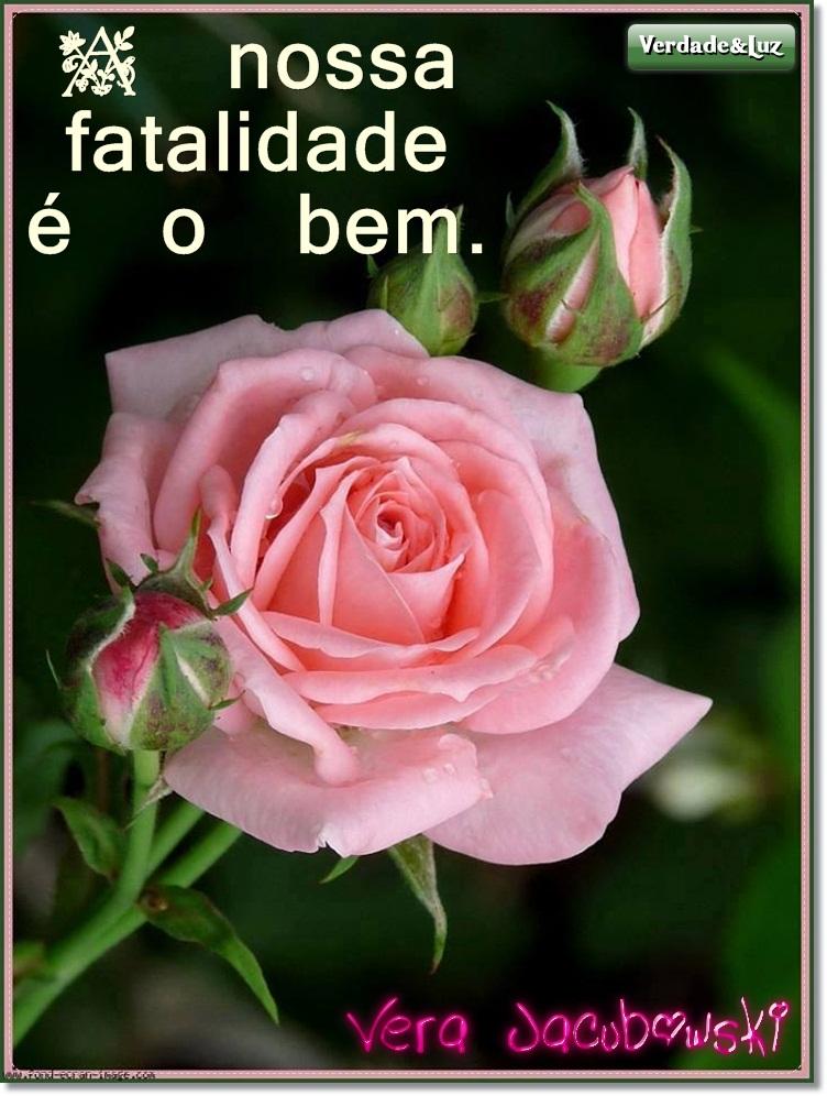 rosa lindas
