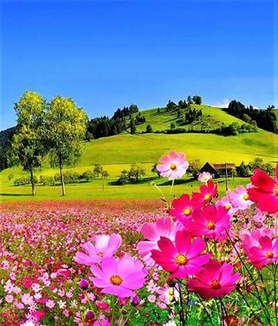 Linda Paisagem Flores Verdade Luz