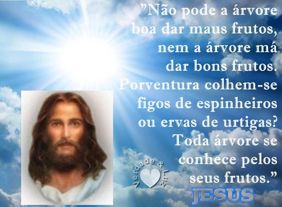 frutos da árvore jesus