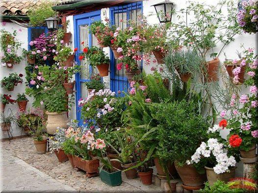 flores na casa
