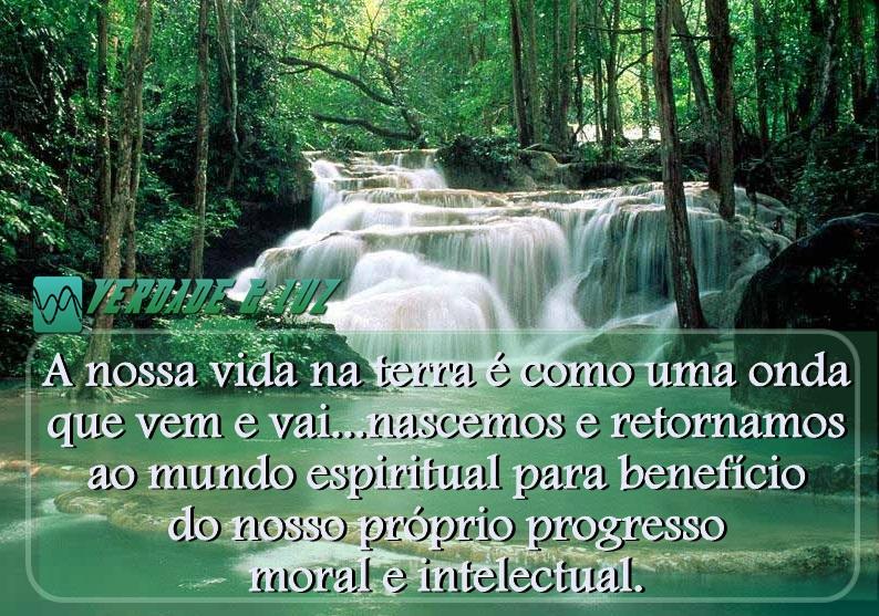 rio floresta